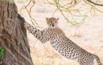 safaris-tanzania